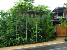 Tropical planting in Port Douglas, photo by tanetahi on flickr  Another dream travel destination: Australia!!!