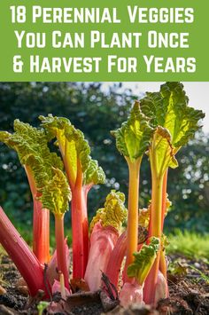 18 Perennial Veggies You Can Plant Once and Harvest For Years - If you like the idea of planting a veggie ONCE, and then harvesting it every year, sometimes for decades, then these perennials are for you. Fall Garden Vegetables, Plants, Herbs, Perennials, Easy Garden, Perennial Vegetables, Organic Gardening, Planting Herbs, Harvest