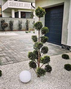 """139 kedvelés, 0 hozzászólás – SD KERT - Spiegel Ákos (@topgarden) Instagram-hozzászólása: """"#alakfa #dolomit #topgarden #landscape #kertszépítő #kertépítés #kerttervezés #letisztult #előkert…"""" Land Scape, Garden Ideas, Sidewalk, Plants, Instagram, Side Walkway, Walkway, Landscaping Ideas, Plant"""