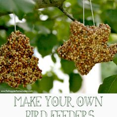 Make Your Own Birdfeeders
