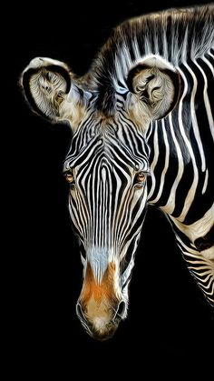 My daughter would LOVE this.  She loves zebra stripes.  What better than a picture of an actual zebra? ;p
