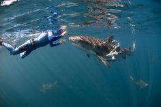 Humans and Tiger Shark