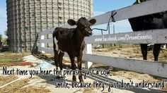 """Next time you hear the phrase """"just a cow"""" smile,  because they """"just don't understand"""" Www.facebook.com/DreamGenetics"""