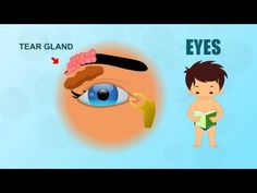 Great YouTube resource! Learn about Human Body Parts For Kids, a series of short videos explaining body parts.