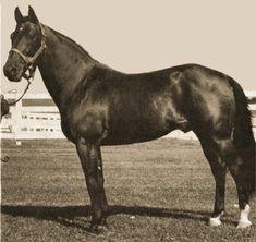 Adios (Standardbred) - Adios (horse) - Wikipedia, the free encyclopedia