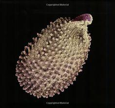 Seeds: Time Capsules of Life: Rob Kesseler, Wolfgang Stuppy, Alexandra Papadakis: 9781554072217: Amazon.com: Books
