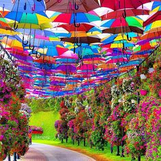 The colors of Dubai Miracle Garden, Dubai - U.A.E ✨❤️✨ Picture by ✨✨@JhimGreg✨✨ Tag who you'd go with!!!