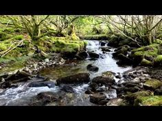 """The Song Of Wandering Aengus""-WB Yeats-Irish Poetry-Beautiful Inspired Nature Poem-Poetry Reading Nature Poem, Nature Music, Real Nature, Nature Gif, Nature Sounds, Sight & Sound, Singing Tips, Music Heals, Meditation Music"