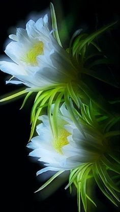 nice  :comment s'appelle cette fleur? // looks like a cactus flower to me