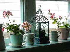 geraniums on kitchen sill