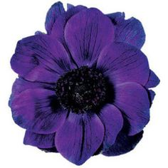 Types of Purple Flowers | Different types of purple flower