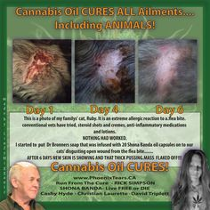 Cannabis Oil heals wounds... like Nature intended it to.