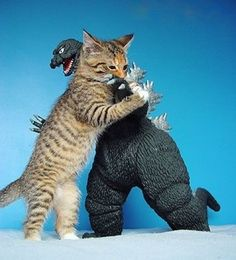 Godzilla finally meets his match in an epic battle. Once Godzilla fell over, the Giant kitten walked away, now bored. Cool Cats, I Love Cats, Funny Cats, Funny Animals, Cute Animals, Crazy Cat Lady, Crazy Cats, Gatos Cool, Photo Chat