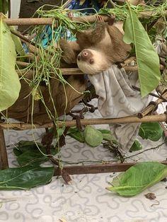 Monteverde, Costa Rica, Animals, Animales, Animaux, Animal, Animais