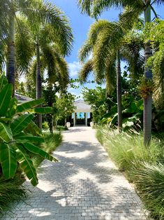 Our garden is a large part of Calabash. Here you will not only find balance and tranquillity but there is also a lot to discover. Jermaine is a great guide and will give you a great tour. Granite Paving, Mood Images, Caribbean, Most Beautiful, Sidewalk, Tours, Island, Beach, Garden