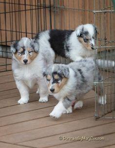 Bi-blue babies