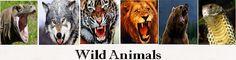 Tiger Facts | Information | Habitat