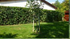 Arch, Outdoor Structures, Garden, Toscana, Image, Garten, Arches, Lawn And Garden, Outdoor