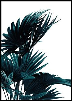 Poster with palm leaves | Botanical photos | Desenio
