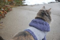 I made Molly a cat hoodie quite some time ago. Jason and I thought RapCat (checkers' commercials) was just too ridiculous and…