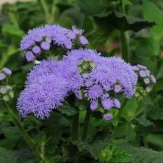 Buy Online Vegetable Seeds in India Flower Seeds Hybrid Herb Seeds India All Plants, Potted Plants, July Flowers, Pink And White Flowers, Herb Seeds, Bird Tree, Flower Seeds, Planting Seeds, Perennials