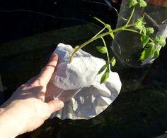 blog photos march 2012 302