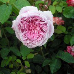 pretty jessica rose