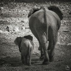 Were Walking... by carstenmeyerdierks #animals #animal #pet #pets #animales #animallovers #photooftheday #amazing #picoftheday