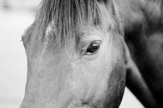 Black and white close up of a horse's head.