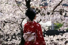 """Why Japan is so wild about cherry blossoms.   Mono No Aware is a Japanese aesthetic that might be translated """"the impermanence of things."""" It suggests that things are more attractive that don't last. The classic example of Mono No Aware are cherry blossoms. They bloom in brilliant light at the beginning of Spring and fall within days. In Japan, this is widely considered a beautiful event that symbolizes the temporary nature of all things."""