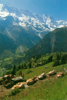 Murren, Switzerland Resting in the Sunshine La Provence France, Places To Travel, Places To See, Landscape Photography, Nature Photography, Beautiful Places To Visit, Amazing Places, Wonderful Places, Places Around The World