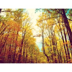 Great Smoky Mountain National Park #fall #yellow