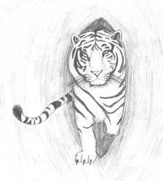 White Tiger Drawing by King-Radical-II on DeviantArt