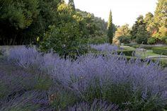 Mariage du bleu et du vert dans un jardin méditerranéen-Dominique Lafourcade