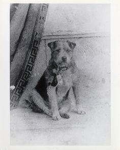Owney was a stray dog who wandered into the Albany, New York, post office in 1888. The clerks let him stay the night, and he fell asleep on a pile of empty mailbags. Owney was attracted to the texture or scent of the mailbags and began to follow them, first onto mail wagons and then onto mail trains. Owney began to ride with the bags on Railway Post Office (RPO) train cars across the state, and then the country. The RPO clerks adopted Owney as their unofficial mascot, marking his travels by…