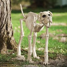 sasha the skeleton dog