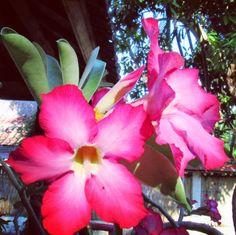 バリと言えばハイビスカスお花って見るだけで元気になる 日本でもハイビスカス育てたいな   #hibiscus #flowers #garden #pink #green #sky #beautiful #bali #thaiairlines #may  #ハイビスカス #南国 #花 #花のある暮らし #家庭菜園 #バリ島