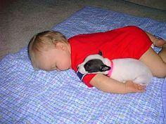 Google Image Result for http://www.ywgrossman.com/newblog/wp-content/uploads/2012/06/baby-pitbull.jpg