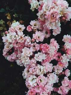 ❤️bush with roses