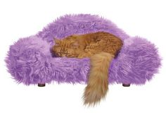 This Furry Thing   19 Cozy Pet Beds That You Totally Want To Sleep In