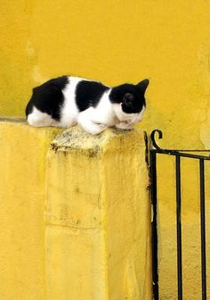 Yellow Wall and Sleeping Cat by Arthur Perruci
