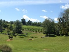 Clinton Vineyards in Clinton Corners, NY