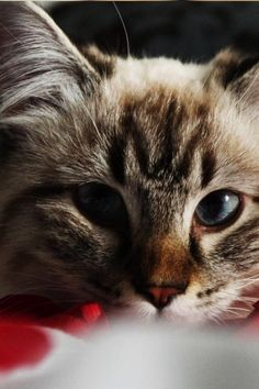 http://www.youtube.com/user/TheFederic777?sub_confirmation=1  #CatVideos #CuteKittens #FunnyCat #KittenVideos