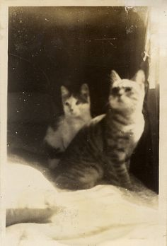 Vintage cat photo, ca. 1940's
