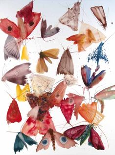 Butterfly art Allyson Reynolds