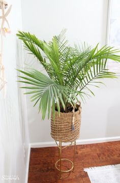 Palm tree care, how to grow an indoor palm, tropical plants, the best indoo Tropical House Design, Tropical Home Decor, Tropical Colors, Tropical Houses, Coastal Decor, Coastal Living, Tropical Plants, Tropical Interior, Tropical Garden