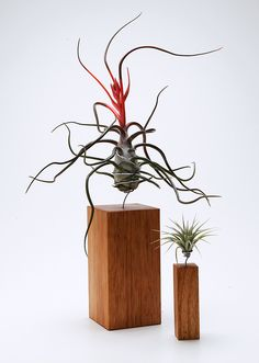 AirplantVessel in hand finished wood | Airplantman Webshop