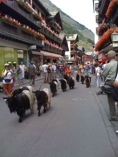 Switzerland  Zermatt. I've seen this. They do it as a tradition every day at 4:00 pm.