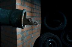 Dirty room-mates make lab mice more useful : Nature News & Comment