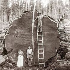 """TheCollageEmpire on Instagram: """"Repost @anonymousworksinc ・・・ People pose in front of the 1,300 year old, 331 foot tall Sequoia tree known as """"Mark Twain"""" in 1892.…"""" National Geographic, Sequoia National Park, National Parks, Tulare County, New Fine Arts, Giant Tree, Big Tree, Old Trees, Nature Photography"""